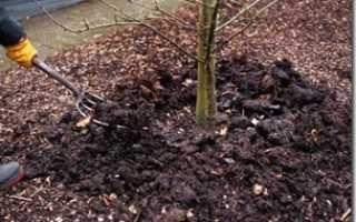 Какое удобрение вносить осенью под яблони