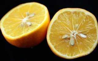 Происхождение гибрида лимона и апельсином