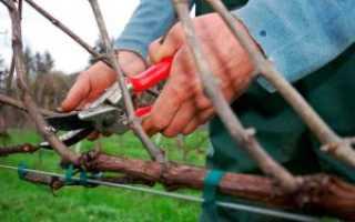 Обрезка виноградных лоз